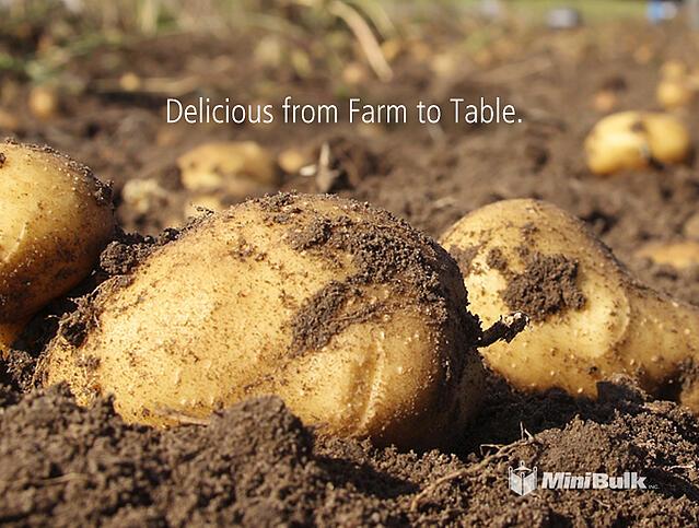 farm potatoes