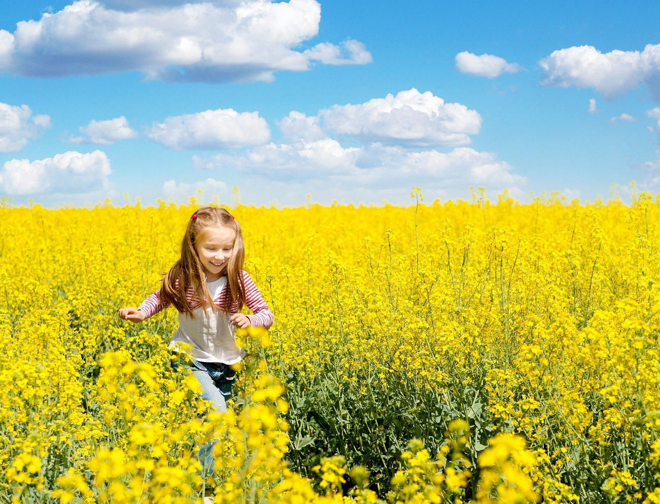 A young girl runs through a field of growing canola on the farm.