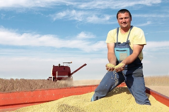 A man holds a handful of his harvested soybeans.