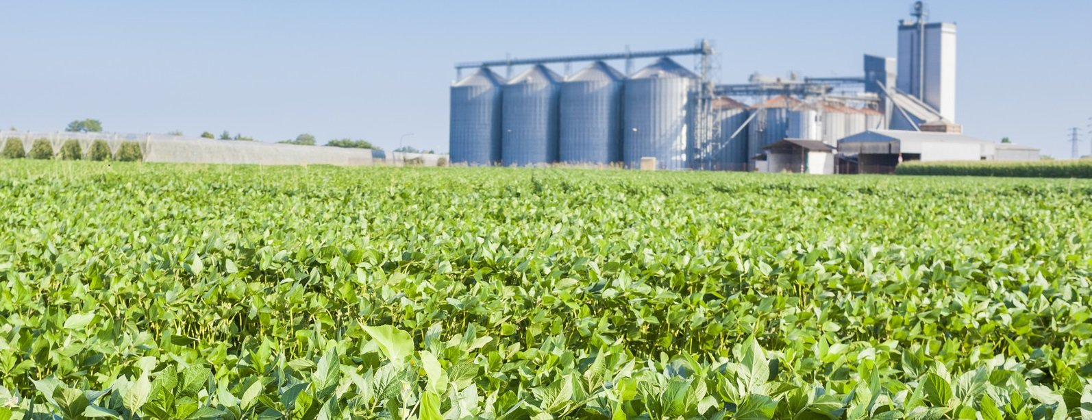Soybeans_CROPPED