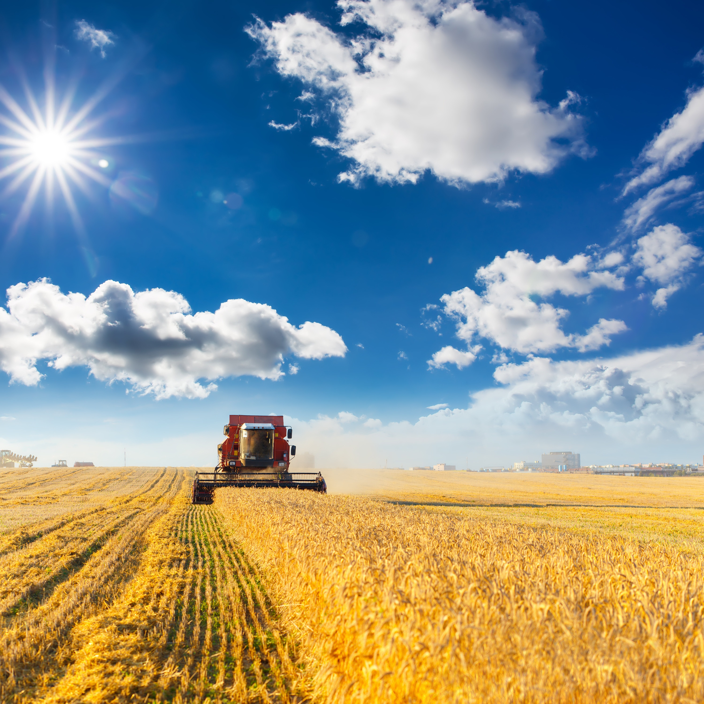 Combine harvesting grains on the prairies